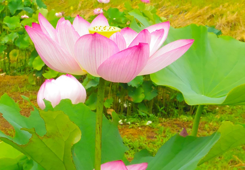 千葉の古民家 芳泉茶寮の瞑想について
